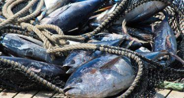 En México la pesquería del atún es una actividad sustentable de clase mundial