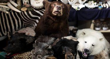Las ventas ilegales en línea de la vida silvestre en peligro de extinción abundan en Europa