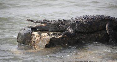 Un cocodrilo mata a un pastor protestante durante un bautizo masivo en un lago de Etiopía