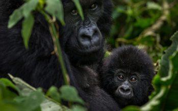 El parque nacional de Virunga en el Congo cierra a los turistas hasta 2019