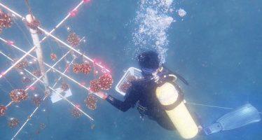 Costa Rica prueba con éxito una pionera técnica para restaurar corales