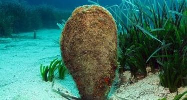 El Mar Menor tendrá un «Banco de Especies Emblemáticas»