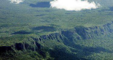 El mundo perdió 15,8 millones de hectáreas de bosque tropical en 2017: el doble del tamaño de Andalucía