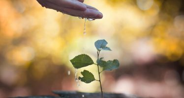 Visiones ambientales