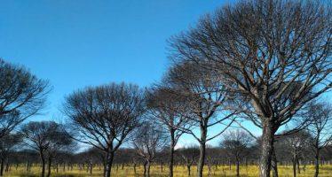 La vida ha brotado con fuerza en los bosques y las dunas del Espacio Natural de Doñana
