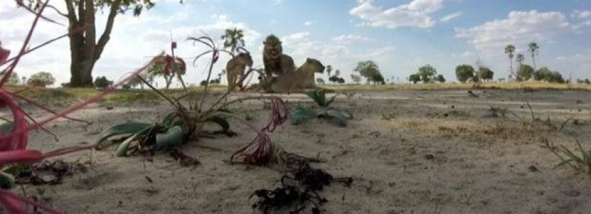 Naciones Unidas busca el compromiso de los anunciantes con los proyectos de conservación
