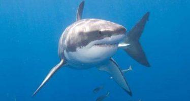 Piden que la pesca ilegal y no declarada sea un delito medioambiental