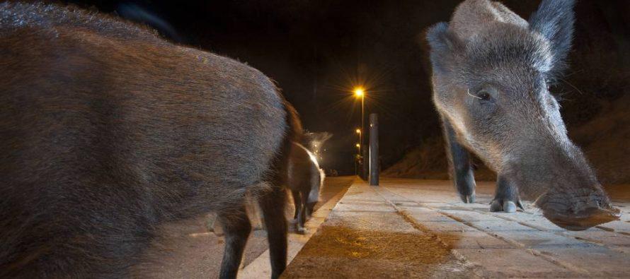 Los animales se están haciendo más nocturnos para evitar a los humanos