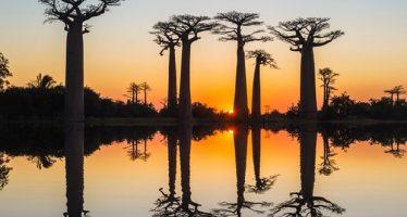 Los gigantes baobab africanos mueren repentinamente después de miles de años