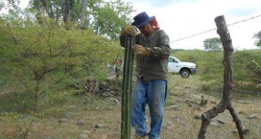 Resiembran 30 cactáceas en la Reserva de la Biosfera Sierra de Huautla, en Morelos