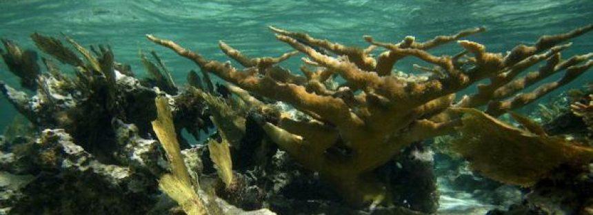 La Gran Barrera de Coral ha experimentado cinco eventos de muerte en los últimos 30.000 años