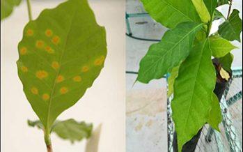 La superficie de las hojas