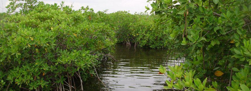 Área de Protección de Flora y Fauna Manglares de Nichupté, Quintana Roo