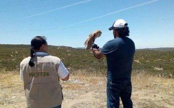 Rescatan 28 ejemplares de vida silvestre en Baja California; liberan 16