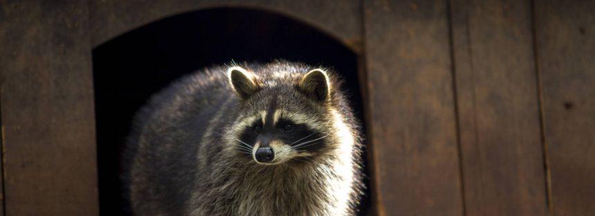 Aceite de cannabis para curar animales en Canadá