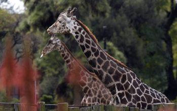 Sin visitas en el legendario zoológico de Buenos Aires
