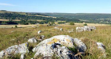 National Trust compra dos sitios de flores silvestres para proteger la vida silvestre