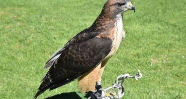 Visitan titulares de Sedena y Semarnat el Centro Nacional de Control y Protección del Águila Real