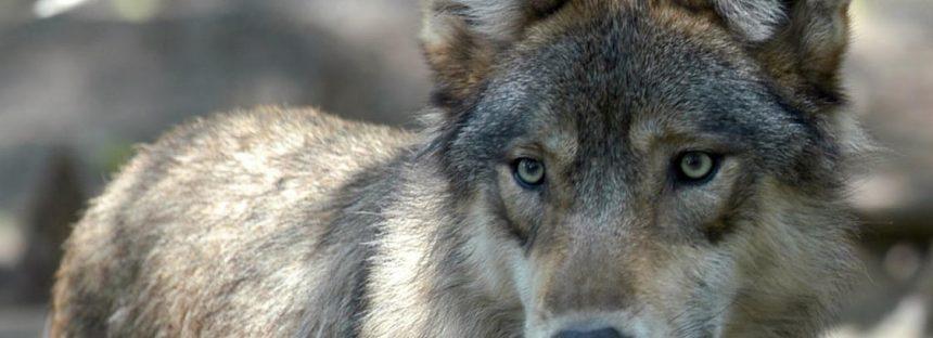 Estas seis especies están a punto de ser sacrificadas para la industria del petróleo y el gas