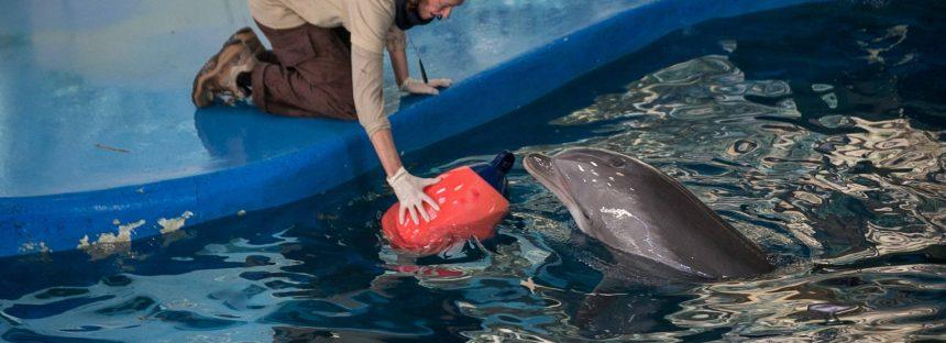 El Ayuntamiento planea enviar los delfines del zoo de Barcelona a Baltimore