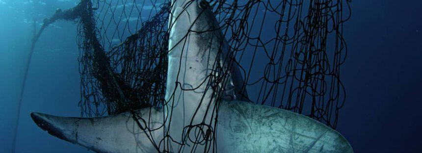 Atrapados en las redes sin querer