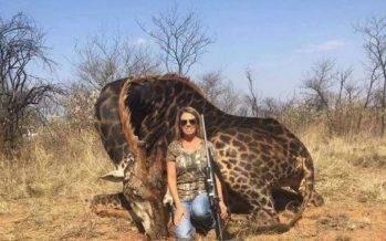 """Una cazadora exhibe una jirafa muerta como trofeo y la llaman """"neandertal"""""""
