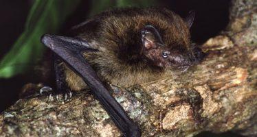 Especies amenazadas: nueve mamíferos y la niebla de montaña podrían unirse a la lista de extinción
