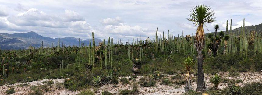 Valle de Tehuacán-Cuicatlán en México, inscrito en la Lista del Patrimonio Mundial de UNESCO