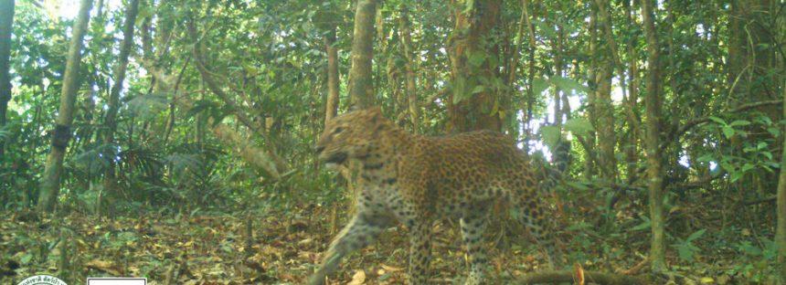 Nuevas fotos de cámara trampa en Tailandia revelan un refugio de vida silvestre