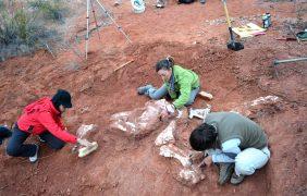 El hallazgo de un fósil en Argentina adelanta en 30 millones de años el origen del gigantismo