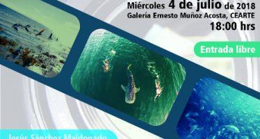 Proyección Ecoazul documental de la vida marina en México