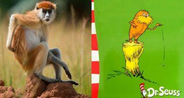 Lorax del Dr. Seuss inspirado en los monos anaranjados de Kenia