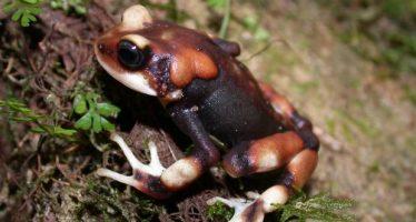 Nueva actualización de la Lista Roja de la Unión Internacional para la Conservación de la Naturaleza