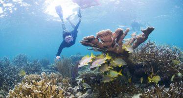 El arrecife más importante de América sale de la lista de Patrimonio Mundial en peligro de la Unesco