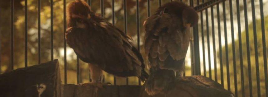 Los guardianes de las aves