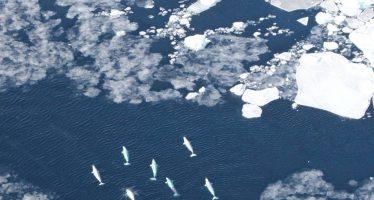 Los barcos se cruzan en el camino de la vida en el Ártico