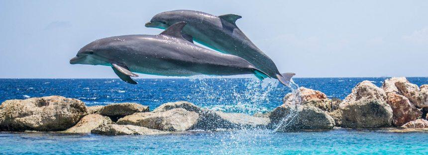 La protección de los delfines y las aves marinas es más débil en los planes de Brexit