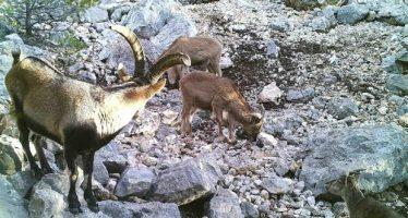 Podrán volverse a cazar y pescar ciertas especies invasoras
