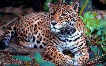 El muro fronterizo propuesto entre Estados Unidos y México amenaza la biodiversidad