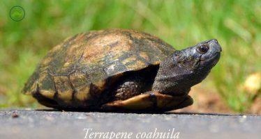 David la tortuga, salva su hogar la Poza de Becerra