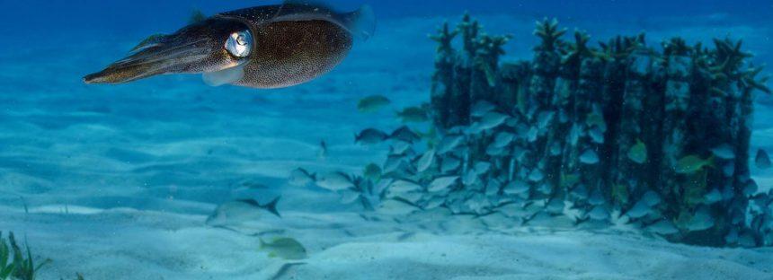 22 Años del Parque Nacional Costa Occidental De Isla Mujeres, Punta Cancún Y Punta Nizuc