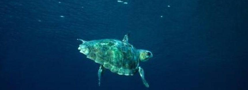 España ya salvaguarda cerca del 13% de sus zonas marinas