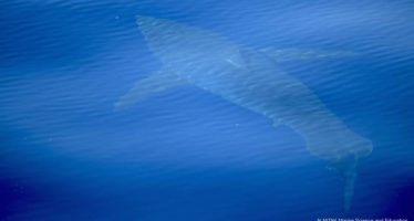 El documentalista que filmó el supuesto tiburón blanco hace público el vídeo