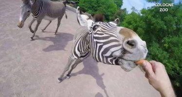 La dura vida de cuidador de zoo
