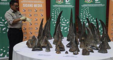 Incautados 50 cuernos de rinoceronte valorados en más de 10 millones de euros