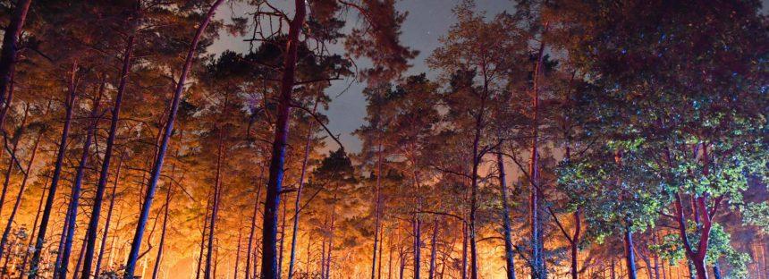 La ola de calor provoca incendios y pérdidas millonarias para la agricultura en Alemania