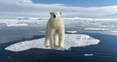 Un oso polar en la puerta de casa