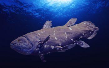 Más antiguo que los dinosaurios: los últimos celacantos sudafricanos amenazados por la exploración petrolera