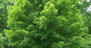 Los vegetales y la vida en la Tierra