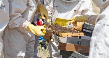 Un santuario para abejas en Leganés